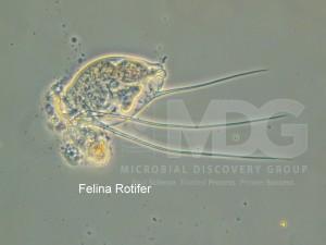 rotifer.00_00_00_00.Still002