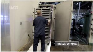 freeze dry, bacillus drying